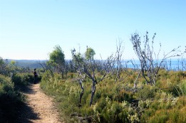 Taking a walk in Deep Creek Conservation Park